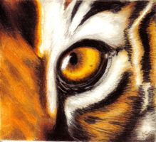 Eye of the Tiger by Rebeccannoying