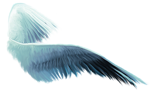 FREE PNG 2015BDwings by DeniseWorisch