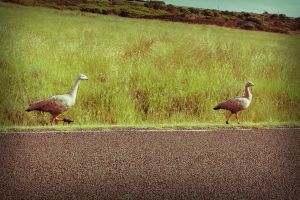 2 Lil' Hitch Hikers by baby-drummer23