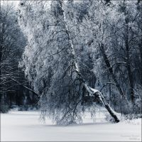 Winter Tree by KARRR