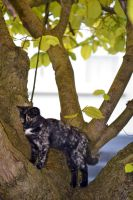 Cat In A Tree Stock by jojo22