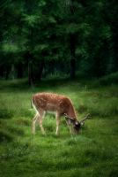 Deer by RavensLane