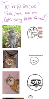 My Cats Do Memes! by RaeLogan