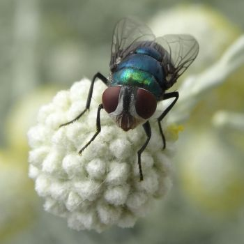 Pretty Fly. by me-and-mojo
