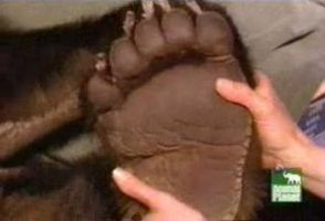 Massage huge grizzly's sole 2 by Giran-