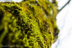 Green moss by InOnesMindsEye