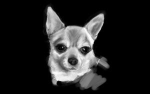 Chihuahua by smilie5768