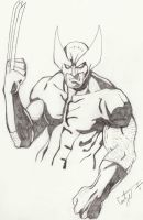 Wolverine by Hyperdogproductions