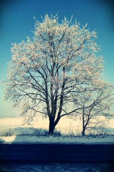 white frost tree by oobserwatorka