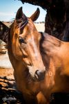 Donny by EquinePhotographerGS