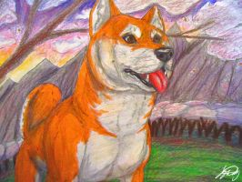 Shiba Sunset by VorpalBeast