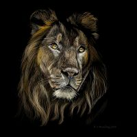 Lion by rojobe