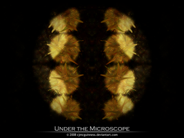 Under The Microscope by cjmcguinness
