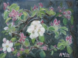 Apple Blossom, 2014 by Starsong-Studio