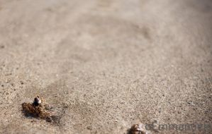Shrimp stuck in the sand by oEmmanuele