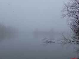 Foggy by penfold73