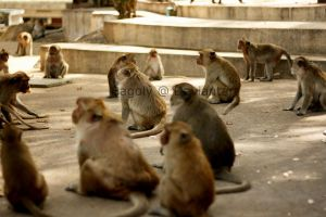 Monkey meeting. by Bagoly