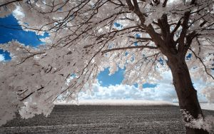 White Trees XI by myINQI