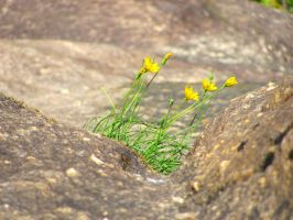 Between a rock and a hard place by Kaligem