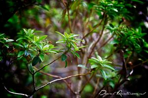 Leaves.. by danniibooy