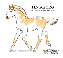 A2020 Foal Design by LiddleCherry