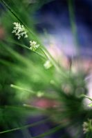 some green stuff in the garden by spsera