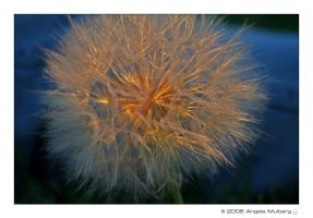 Make A Wish by Astraea-photography