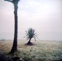 Holga 92 by xxlogre