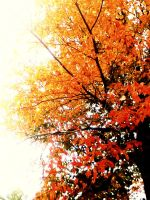 Fall Tree by SwimmerGirl96