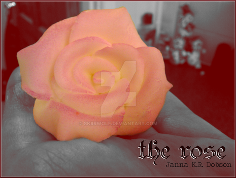 the rose - Valentine's Day by Sk8rWolf