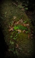 Moss On A Log by EpicPseudonym