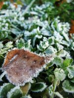 Leaf and ice by mateuszskibicki1