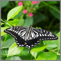 Black White Patterned by Mogrianne