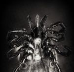 Ixodes persulcatus by moussee