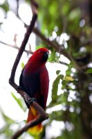 Parrot I by LDFranklin