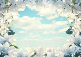 Frame Of Flowers by Tumana-stock