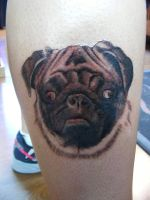 Pugly by spidey1