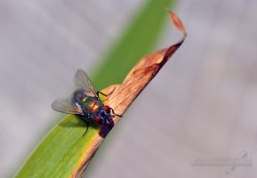 Colourful fly by Angi-Shy