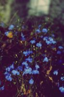 Forget Me Not... by Jesssiiiieeee