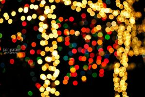 Season of Bokeh 3 by isangkilongkamera