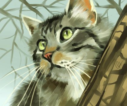 Maine Coon by Canvascope