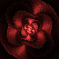 Sweet Red Rose by Kattvinge