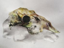 Deer Skull by backhendl