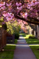 Spring Afternoon in New West I by bcdirector