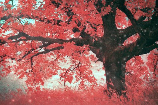 the tale of the Red Tree by LuizaLazar