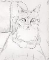 My cat Norma by HurricaneJosh