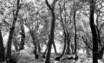 trees2 by georges-dahdouh