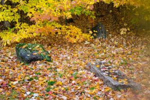 White Mountains  Fall Foliage  159 by FairieGoodMother