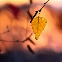 Lonely leaf by knowhopeinme