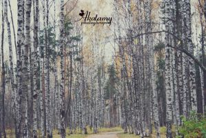 Birch Grove. by Akatamy